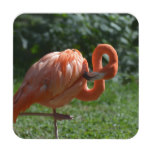 Perfect Pink Flamingo Drink Coaster