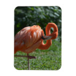 Perfect Pink Flamingo Magnet