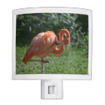 Perfect Pink Flamingo Night Light