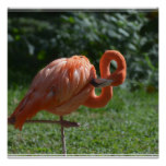 Perfect Pink Flamingo Poster