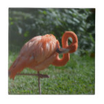 Perfect Pink Flamingo Tile