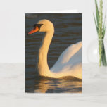 Pretty Swan Greeting Card