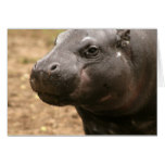 Pygmy Hippo Greeting Card