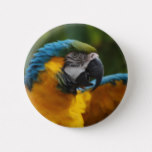 Ruffled Blue and Gold Macaw Button