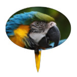 Ruffled Blue and Gold Macaw Cake Topper