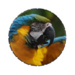 Ruffled Blue and Gold Macaw Candy Tin
