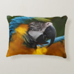 Ruffled Blue and Gold Macaw Decorative Pillow