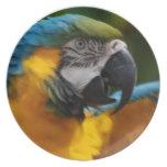 Ruffled Blue and Gold Macaw Dinner Plate