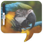 Ruffled Blue and Gold Macaw Dry Erase Board