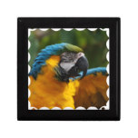 Ruffled Blue and Gold Macaw Gift Box