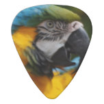 Ruffled Blue and Gold Macaw Guitar Pick