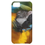 Ruffled Blue and Gold Macaw iPhone 5C Case
