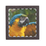 Ruffled Blue and Gold Macaw Jewelry Box