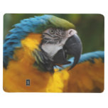 Ruffled Blue and Gold Macaw Journal