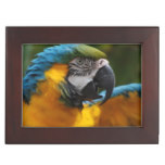 Ruffled Blue and Gold Macaw Memory Box