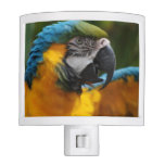 Ruffled Blue and Gold Macaw Night Light