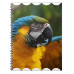 Ruffled Blue and Gold Macaw Notebook