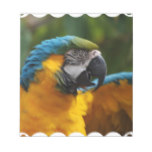 Ruffled Blue and Gold Macaw Notepad