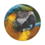 Ruffled Blue and Gold Macaw Paper Plate
