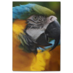 Ruffled Blue and Gold Macaw Post-it Notes