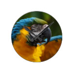 Ruffled Blue and Gold Macaw Round Clock