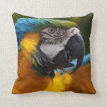 Ruffled Blue and Gold Macaw Throw Pillow