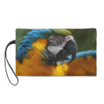 Ruffled Blue and Gold Macaw Wristlet Purse
