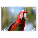 Scarlet Red Macaw Card