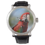 Scarlet Red Macaw Wrist Watch