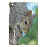 Squirrel Hanging in A Tree iPad Mini Case