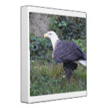 Standing American Bald Eagle 3 Ring Binder
