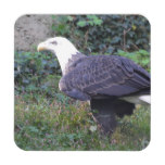Standing American Bald Eagle Coaster
