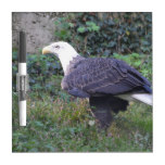 Standing American Bald Eagle Dry Erase Board