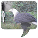 Standing American Bald Eagle Dry-Erase Board