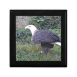 Standing American Bald Eagle Keepsake Box
