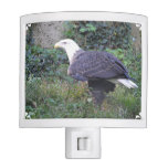 Standing American Bald Eagle Night Light