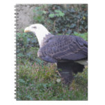 Standing American Bald Eagle Notebook
