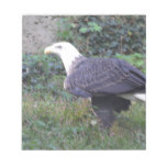 Standing American Bald Eagle Notepad