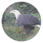 Standing American Bald Eagle Plate