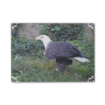 Standing American Bald Eagle Post-it Notes