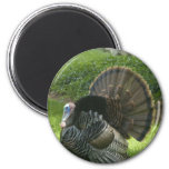 Wild Turkey Magnet