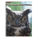 Wise Long Eared Owl Notebook